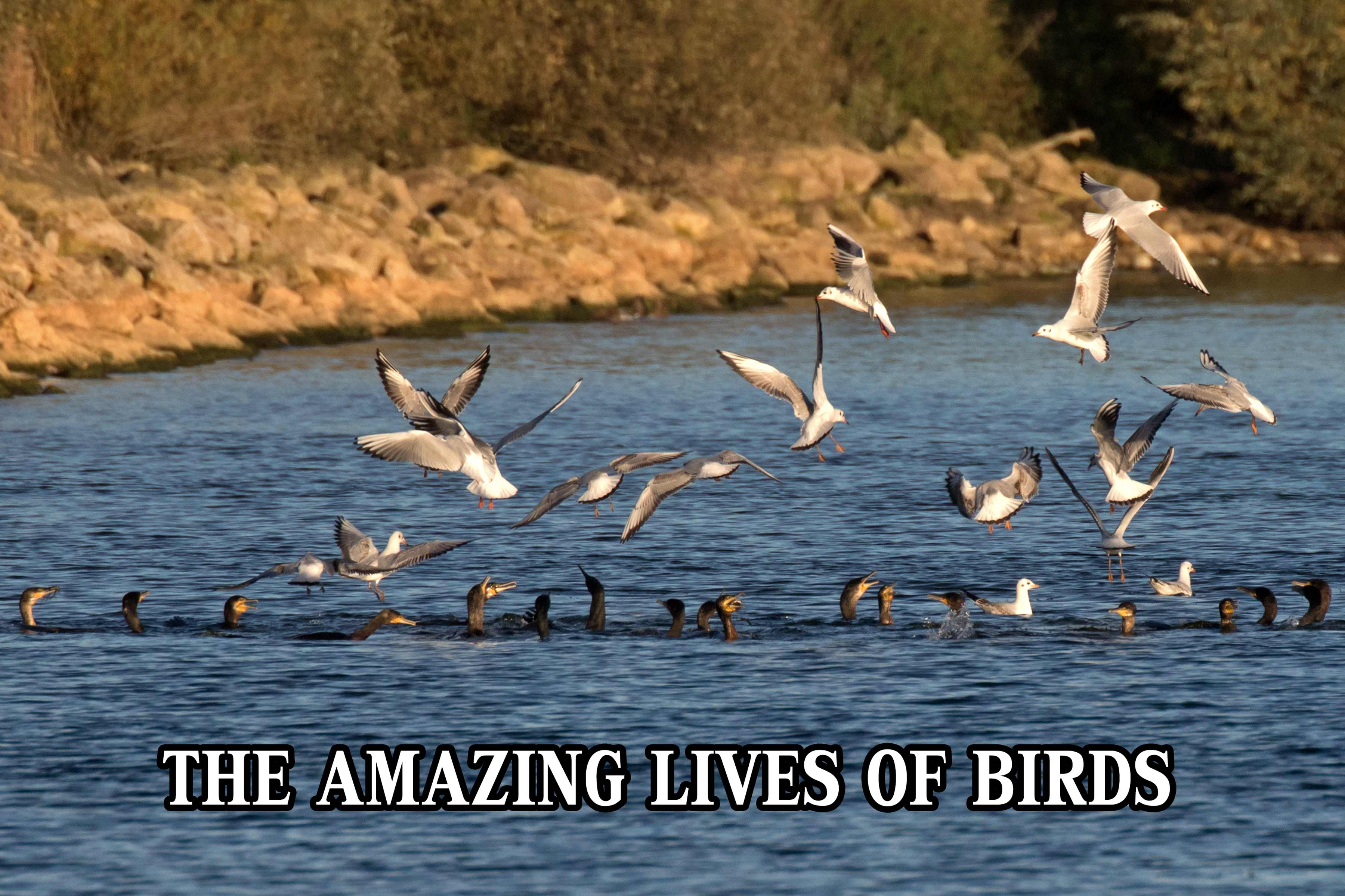 The Amazing Lives of Birds